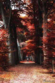 My love for autumn,Denmark.