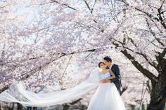 Springtime wedding photoshoot under blooming cherry blossoms // Spring in Kyoto: Claude and Clarabelle's Sakura Engagement