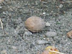 """Mud dirty nut"" by - Mostphotos Mud, Animal, Animals, Animaux, Animales"