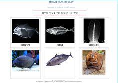 צילומי רנטגן של בעלי חיים   MOMtessori Way Diy Light Table, Art, Art Background, Kunst, Performing Arts, Art Education Resources, Artworks