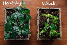 What's Wrong with My Seedlings? – Pinetree Garden Seeds