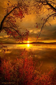 "philkoch: «Fils de Mère Nature"" Coucher de soleil sur Mauthe LakeWisconsin Horizons Par Phil Koch.Lives à Milwaukee, Wisconsin, USA."