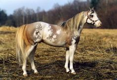 Wow, I had a REALLY hard time deciding whether this was a real horse or not.  What a beautiful customization.
