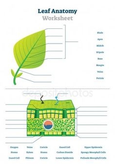 Pin by Ash S. on Home learning | Plant science, Anatomy ...