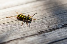17052014-_MG_5021 | Flickr: Intercambio de fotos Insects, Naturaleza, Scenery, Photos