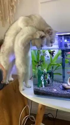 Funny Cute Cats, Cute Cats And Kittens, Cute Funny Animals, Kittens Cutest, Funny Birds, Cute Cat Gif, Big Cats, Fluffy Kittens, Happy Animals