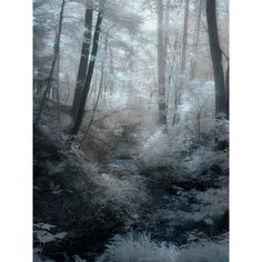 (via winter white /;) ❤ liked on Polyvore featuring backgrounds, snow and winter