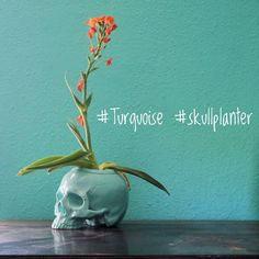 skull You got thirsty plants with small roots? Then are perfect for you. Skull Planter, Cold Mountain, Self Watering Planter, Human Skull, Ceramic Planters, Day Of The Dead, Aqua Blue, Be Perfect, Roots