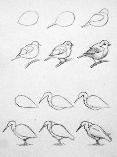 Pencil Drawing Techniques - Learn the easiest ways to draw birds. Step by Step bird drawing tutorial. Bird Drawings, Pencil Art Drawings, Art Drawings Sketches, Easy Drawings, Sketches Of Birds, Birds Drawing Images, Simple Bird Drawing, Love Heart Drawing, Easy Animal Drawings