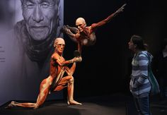 """A visitor looks at plastinated human corpses in a pose titled """"The Reflection Of Time"""" at the Body Worlds exhibition on April 27, 2011 in Berlin, Germany. The exhibition, which features human and animal corpses plastinated by Gunther von Hagens, focuses on the role of the heart. It will be open to the public at the Postbahnhof from April 27 to August 14."""