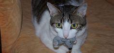 Katten die buiten komen, willen hun eigenaren wel eens verrassen met een 'cadeautje', een prooi die ze mee naar huis nemen. Is dat echt bedoeld als cadeau?