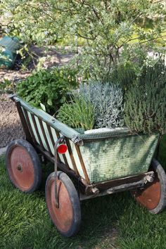 Ein ausgedienter Bollerwagen lässt sich hervorragend zum transportablen Kräutergarten umfunktionieren