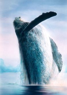 Magnificent whale