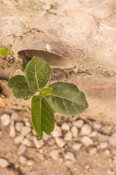 Plant Leaves, Plants, Travel, Trips, Traveling, Flora, Plant, Tourism, Planets