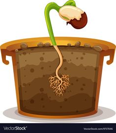 Seed germination in clay pot Royalty Free Vector Image Planting In Clay, School Science Projects, Social Skills Lessons, Seed Germination, Jack And The Beanstalk, Plant Science, Spring Activities, Photography For Beginners, Garden Crafts