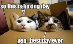 A wonderful collection of funny cat pictures to put a smile on your face. These funny cat pics are sure to brighten your day. I Love Cats, Cute Cats, Funny Cats, Funny Animals, Cute Animals, Silly Cats, Funniest Animals, Funniest Gifs, Crazy Cat Lady