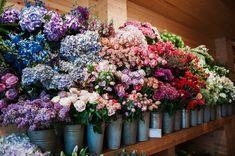 mark colle florist shop