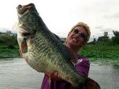 crappie record world largemouth bass Bass Fishing Pictures, Fishing Photos, Bass Fishing Tips, Gone Fishing, Best Fishing, Trout Fishing, Kayak Fishing, Fishing Stuff, Fishing Games