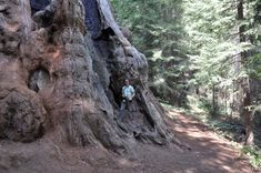 Giant Sequoia National Monument, picture by Marc Meyer, 20th of July 2013