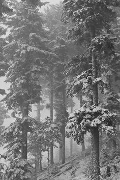 snow on wood