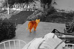 Garfield by Raúl Soriano Meseguer, via Flickr