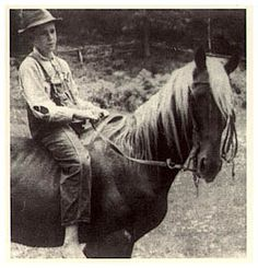 In the mid-20th century, a stallion named Old Tobe, owned by a prominent breeder, was used to develop the modern type; today most Rocky Mountain Horses trace back to this stallion.