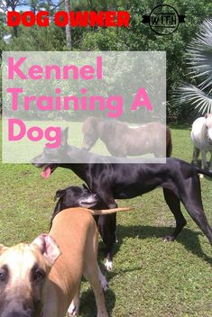 What You Need To Know About Kennel Training A Dog ** You can get more details by clicking on the ima Kennel Training A Dog, Crate Training, Dog Training Tips, Stress And Anxiety, Dog Owners, Need To Know, More Fun, Stuff To Do, Puppies