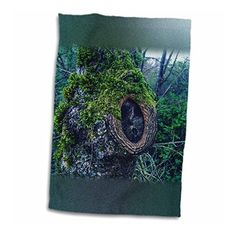 DYLAN SEIBOLD - PHOTOGRAPHY - CUT BRANCH FACE - 11x17 #Towel #fitness #kitchen #bath  Link: