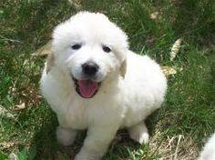 adorable little guy