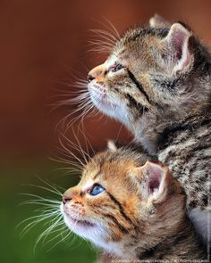 Very interesting post: TOP 50 Funny Cats Pictures.сom lot of interesting things on Funny Animals, Funny Cat. Animals And Pets, Baby Animals, Funny Animals, Cute Animals, Animal Memes, Animal Facts, Pretty Cats, Beautiful Cats, Animals Beautiful