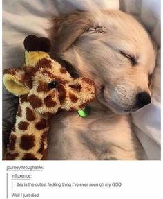 Adorable Little Baby Golden Retriever Sleeping with his Best Friend - Aww! - - Adorable Little Baby Golden Retriever Sleeping with his Best Friend – Aww! Adorable Little Baby Golden Retriever Sleeping with his Best Friend – Aww! Cute Baby Animals, Animals And Pets, Funny Animals, Funny Dogs, Funny Puppies, Bizarre Animals, Smiling Animals, Smiling Dogs, Farm Animals