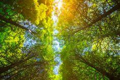 Картинки по запросу sky through branches