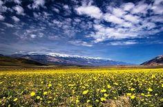 Долина цветов – парк в Гималаях. Это красивое название в полной мере отражает суть природного явления: забравшись на 3500 – 4000 метров над уровнем моря долина раскинула свои нетронутые и неповторимые луга. В сезон больших дождей долина расцветает и «застилает» склоны Гималаев цветным ковром.