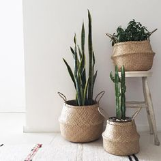 32 Rustic to Ultra Modern Master Bathroom Ideas to Inspire Your Next Renovation - The Trending House Plant Basket, Bamboo Basket, Seagrass Baskets, Hanging Plants, Indoor Plants, Indoor Garden, Potted Plants, Feng Shui, Beach Basket