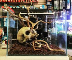 Aquarium Crneo (skull) by on DeviantArt reptiles Aquarium Crneo DeviantArt reptile terrarium snakes skull Aquarium Aquascape, Aquariums, Diy Aquarium, Nature Aquarium, Aquascaping, Tarantula Enclosure, Snake Enclosure, Terrarium Reptile, Aquarium Terrarium