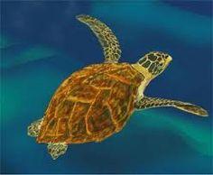 Resultado de imagen para tortuga carey
