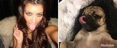 Un carlin imite les selfies sexy de Kim Kardashian  2Tout2Rien