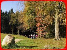 Havelte TIGO 1.11.2014 - 106611875037268196261 - Picasa Webalbums
