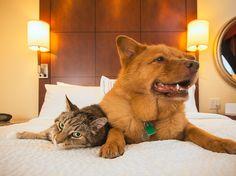 Hundepension: Wenn das Haustier ins Hotel geht #News #Wohnen_mit_Haustieren