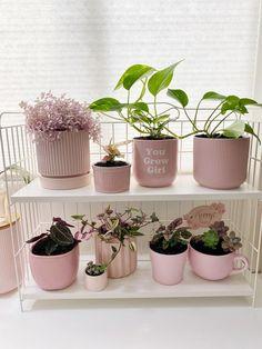 My plants / pink plant collection 💖 - houseplants House Plants Decor, Plant Decor, Decoration Plante, Plant Aesthetic, Plants Are Friends, Pink Plant, Plant Shelves, Plantation, Plant Care
