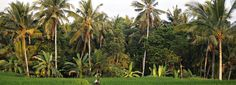 10 great places to visit in Ubud, Bali.  http://townske.com/guide/14681/10-things-to-do-in-ubud-bali