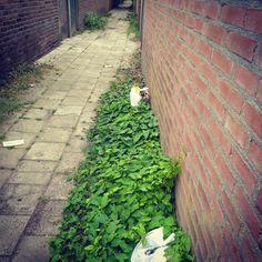 Titel van deze compositie: Driehoek #zwerfieHasseltGoirke #TilburgSchoon #buurtcultuurTilburg