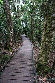 Lamington National Park - Gold Coast, Australia