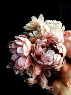 Peony 56 - greige design Probably the most affectionate plant life on earth - Peony Beautiful Flowers Pictures, Pretty Flowers, Pink Flowers, Yellow Roses, Pink Roses, Peony Colors, Black Roses, Black Flowers, Exotic Flowers