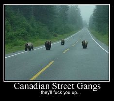 Canada is indeed very special. There are many funny things you will only find meanwhile in Canada. Check out 50 hilarious only in Canada pictures compilation that will make your day. Canada Funny, Canada Jokes, Canadian Memes, Canadian Things, Canadian Humour, Canadian Bacon, Funny Captions, Funny Memes, Funny