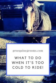 When it's too cold to ride your horse. Sometimes it's too cold to ride, but your horse still needs attention! Here's what you can do to keep your horse exercised, healthy, and happy during bad weather. Horseback Riding Tips, Horse Riding Tips, Dressage, Horse Training, Training Tips, Horse Barns, Horse Stalls, Cutting Horses, Winter Horse