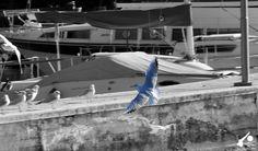 La magia dei gabbiani sul Lago di Garda. #LagodiGarda #Garda #Veneto #GardaVeneto #Verona #Veronese #GardaVeronese