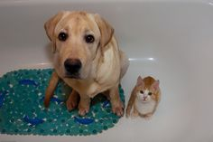 While dogs and cats often pretend to fight, when people aren't looking, they often take showers together.