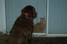 Chloe Cat won't open the door for Toby Dog