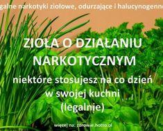 hotto.pl-ziola-o-dzialaniu-narkotycznym-odurzajacym-halucynogennym-stosujesz-je-w-kuchni-legalnie Kraut, Parsley, Detox, Herbs, Food, Youtube, Diy, Stupid Stuff, Bricolage